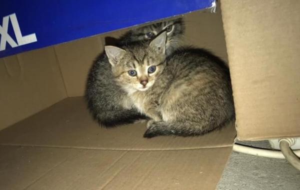 Kotki, które tymczasowo znalazły schronienie w tartaku, potrzebują domów